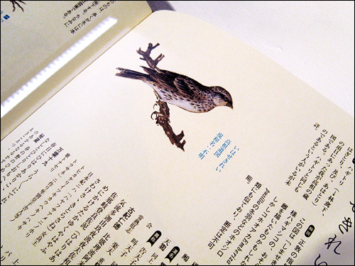Museum für Druckkunst Leipzig Japanese Book Design Exhibition