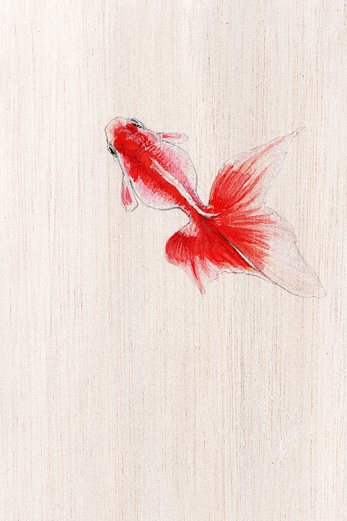 Kingyo / Goldfish Drawing by Wanda Proft