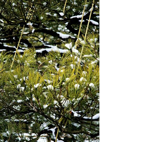 Kanazawa in Snow Drift Kenroku-en