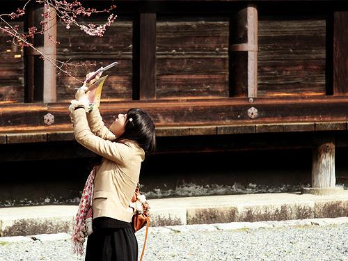 Sakura Hanami Photo by Wanda Proft