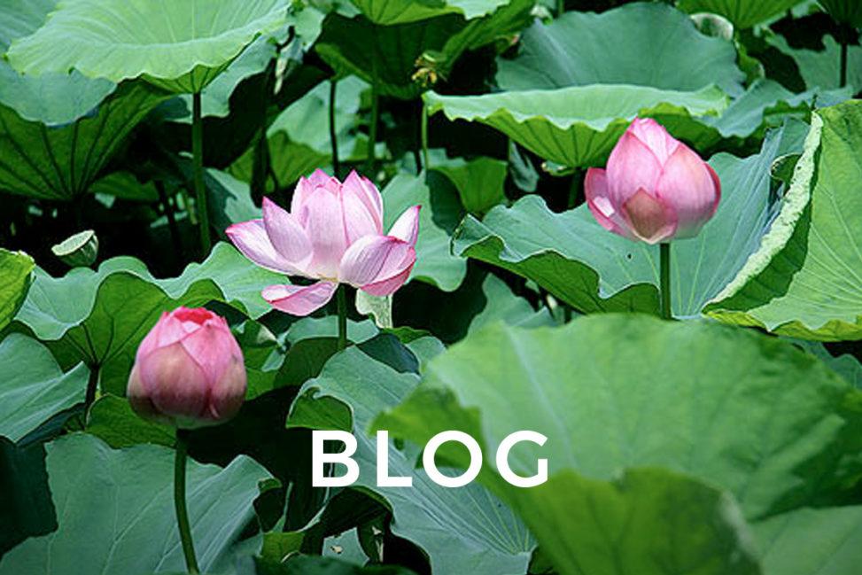 Lotus Ueno 2010