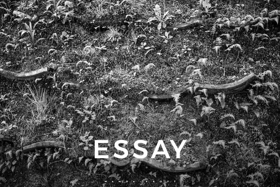 wabi-sabi essay / fern wall, Kyoto 2016
