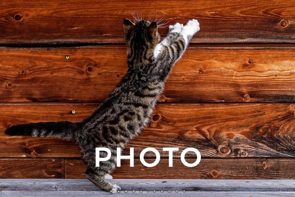 Frieda & Findus Animal Shooting 2018.09.16 Traunstein, Germany © Wanda Proft