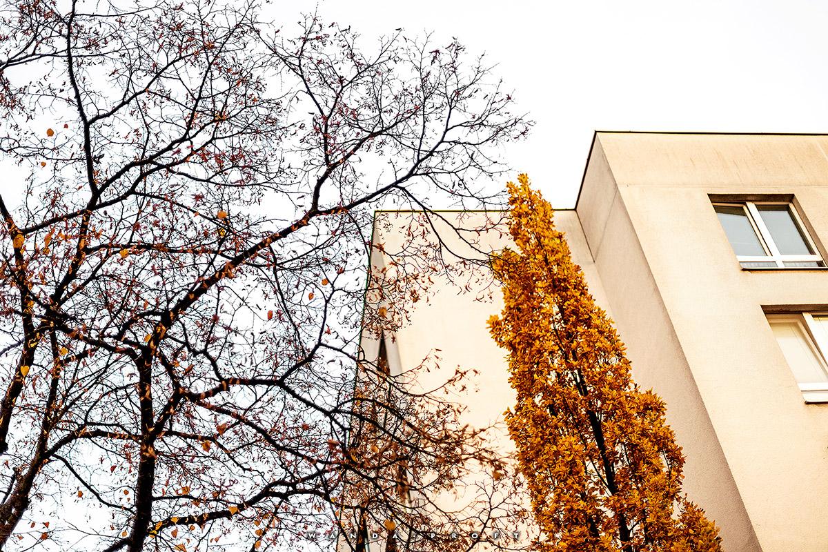 Wilhelmsaue 101, Wilmersdorf, Berlin 2018/11/07 © Wanda Proft