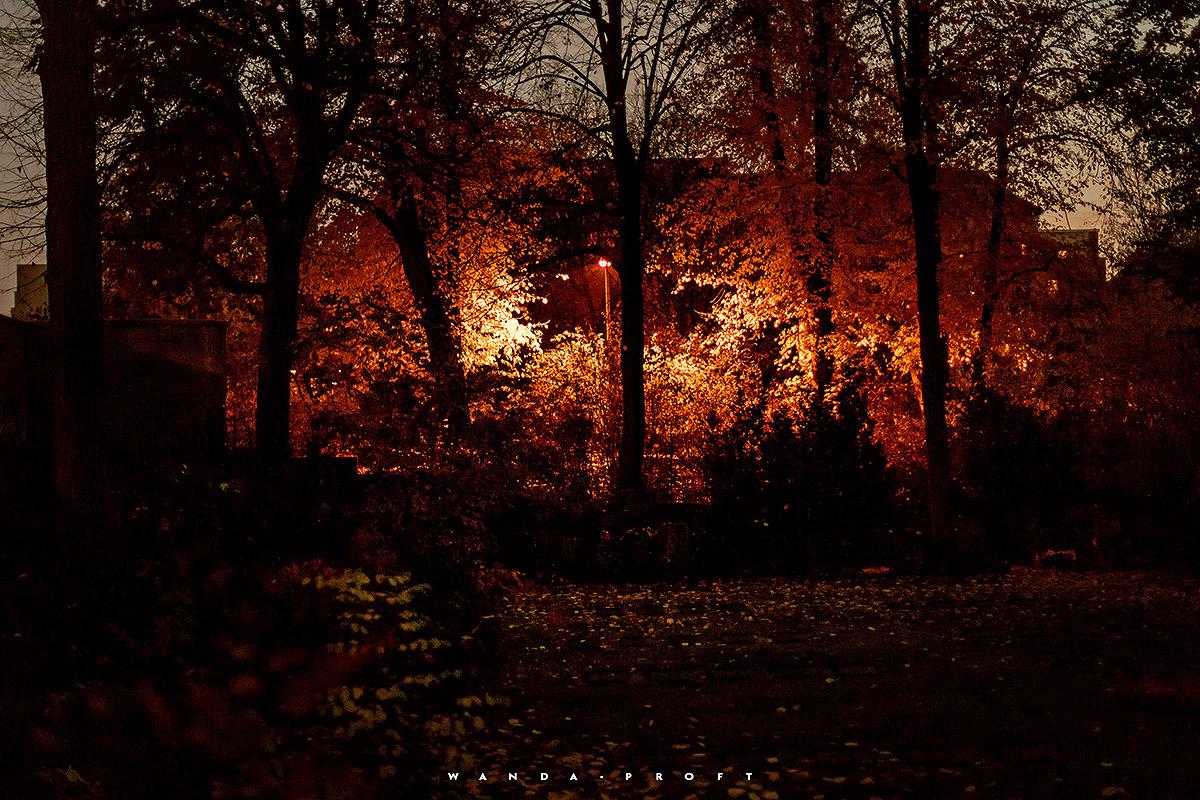 Blick auf den Volkspark Wilmersdorf, Friedhof Wilmersdorf, Wilmersdorf, Berlin 2018/11/07 © Wanda Proft